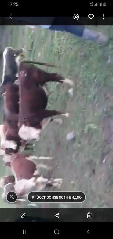4 объявлений | ЖИВОТНЫЕ: Другие животные