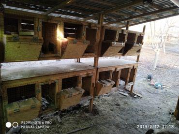 Продаю клетки двухярустные для кроликов с маточником и без. в Novopokrovka