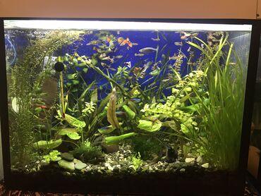 встроенная вытяжка 45 в Азербайджан: Akvarium shekilde gorduyunuz kimi tebii bitkiler ve baliqlarla