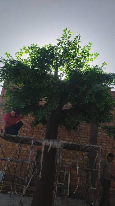 10333 объявлений: Большеразмерные деревья для офисов и дома