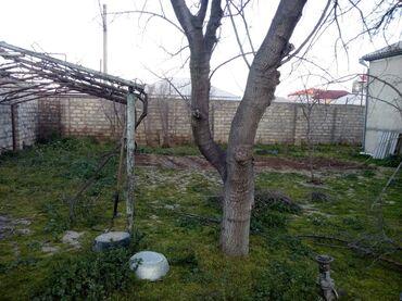 hovsanda torpaq - Azərbaycan: Satılır 3 sot Kənd təsərrüfatı mülkiyyətçidən