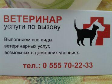 ветеринар-на-выезд-бишкек в Кыргызстан: Профессиональные ветеринарные услуги на дому только по вызову -