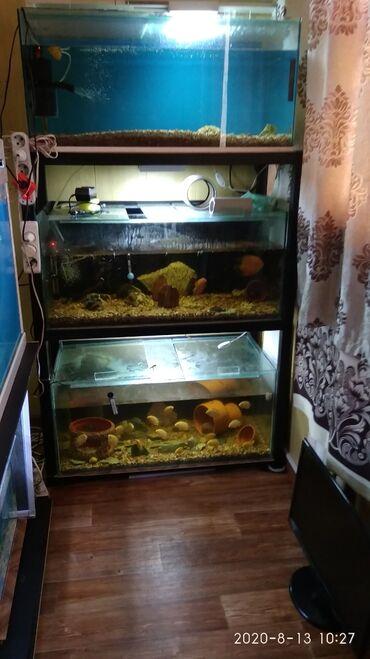 jubka na vysokoj posadke в Кыргызстан: Продается этажерка с аквариумами.Три аквариума по 160 литров каждый,со