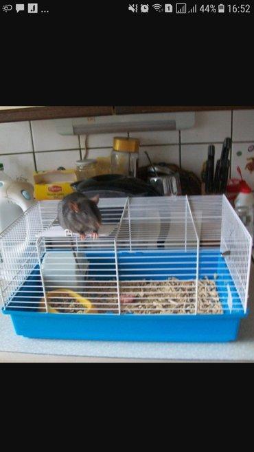 продаются  новые клетки для свинки. крыски в Бишкек