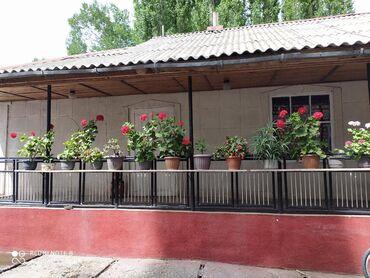 Комнатные растения - Беловодское: Продаю цветы