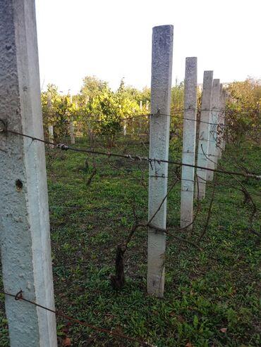 Kuća i bašta - Sombor: Betonski stubovi za vinograd-150 komada,cena je po komadu