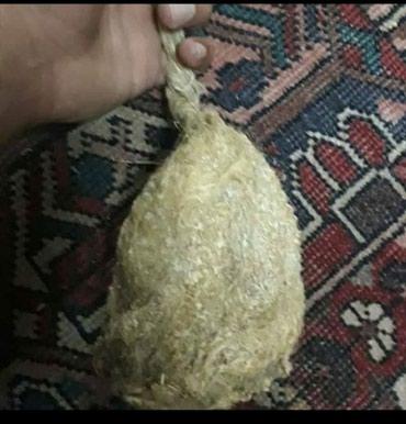 Сатып алам жарканаттын уясын(амрита в Кара-Суу