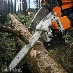 Сухой нашатырь - Кыргызстан: Пилю дрова, небольшие деревья, выкорчевываю пни, кустарники, подрезаю