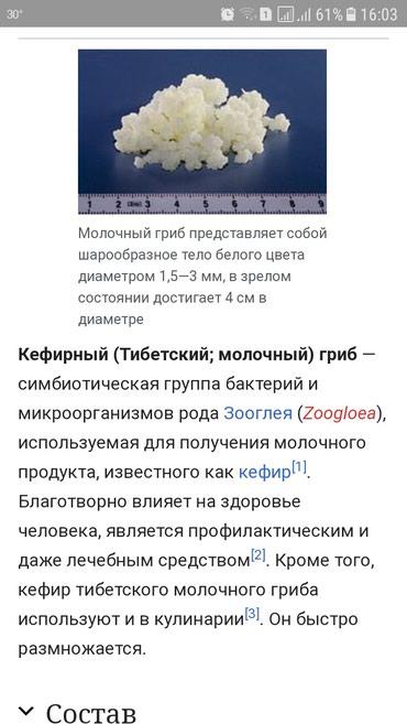 Bakı şəhərində Кефирный гриб