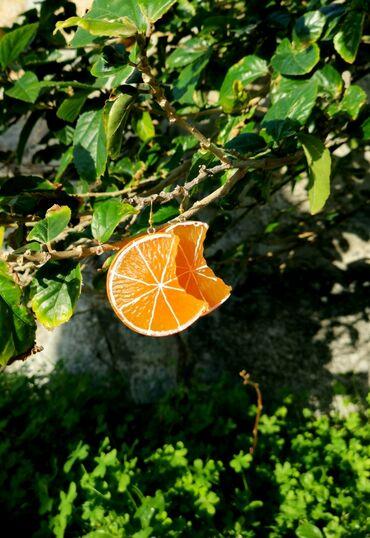 Υπηρεσίες - Ελλαδα: Σκουλαρίκια με Φρούτα 15 ευρώ το ζευγάρι. Τα δύο ζευγάρια 20 ευρώ!!!