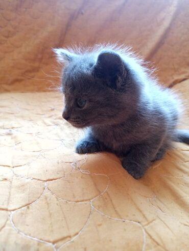 Отдам Котят в добрые руки, 1,5 месяцев. 2 мальчика и 1 девочка. Ласков