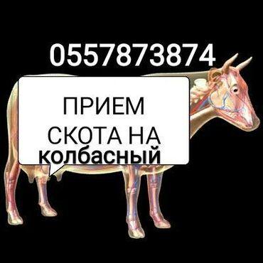 ПРИЕМ МЯСА и СКОТА В Колбасный цех С/х животные на забой