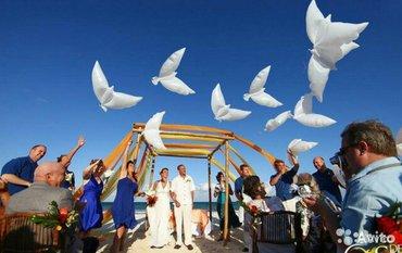 Воздушные шары в виде голубей, для в Бишкек