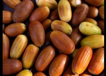 Семена и уличные растения - Кара-Балта: Продам жёлуди