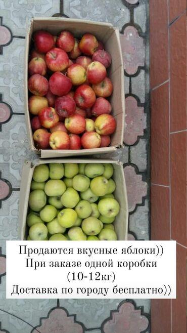 неоновые надписи бишкек в Кыргызстан: Ноокатские яблоки (Ош)•При заказе от 10кг доставка бесплатная!!!•15кг