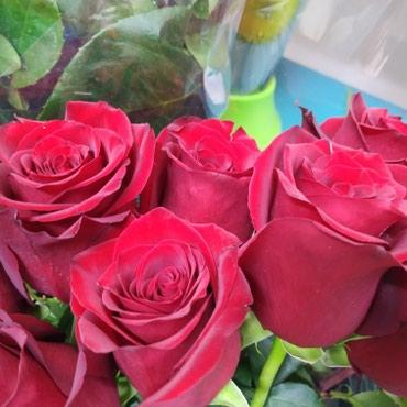 Розы красные голландские по распродаже в Бишкек