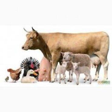 Мел кормовой- кальций для животныхмел кормовой- россия - сертификат и