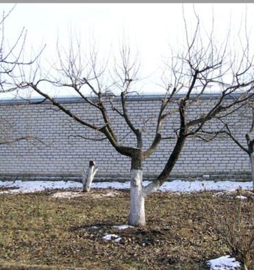 Сезон начался!!! в Бишкек