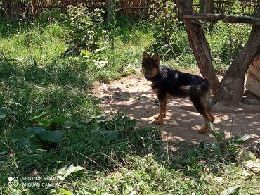 13 объявлений   ЖИВОТНЫЕ: Собаки