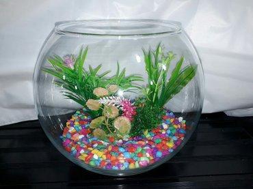 Bakı şəhərində Yumru akvarium +icinin dekoru qiymet cemi 35Azn catdirilma var.