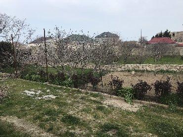 samaxida satilan evler - Azərbaycan: Satış 25 sot Biznes üçün mülkiyyətçidən