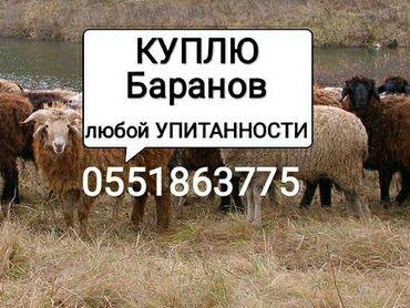 jelektriki na vyzov в Кыргызстан: На мясо и откорм в ЛЮБОМ количество