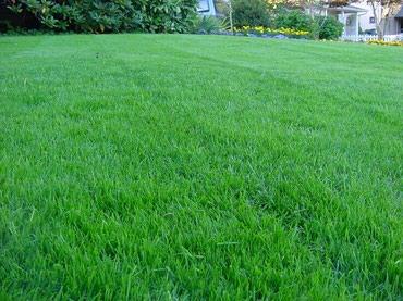 Газон!!! Сеем газон! Качество в Бишкек