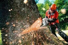 Пилю дрова, деревья все вопросы по телефону в Бишкек