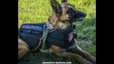 Odelce za psa - Srbija: Trazim prsluk povodac za psa od zandarmerije,vojske