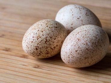 Куплю индющиные яйца на инкубацию.с горантией . в Шопоков