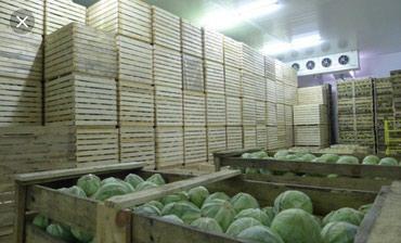 Продаю пром. холодильник на 300 тонн!! в Лебединовка