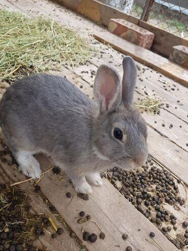 Карликовые кролики 4 месяца