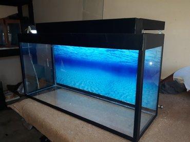 Bakı şəhərində Teze akvarium seliqeli ve munasip qiymet  100 % akvarium ucun silikonl
