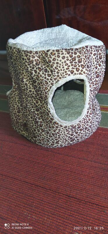 Животные - Таш-Мойнок: Домик для кошки 500