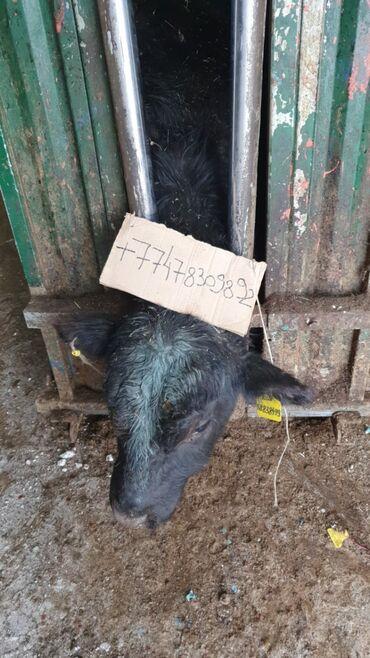 Животноводство продаем сельхоз хозяйства на хозяйстве жирности более