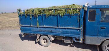 120 объявлений | ЖИВОТНЫЕ: Продаю ботву от моркови полный портер пишите либо звоните село