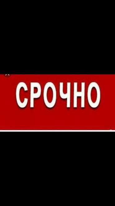 Требуется помощник бухгалтера. в Бишкек