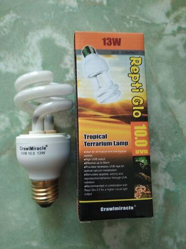 жесткий д в Кыргызстан: Продам лампу для рептилий. Для черепах, змей и т.д