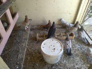 ebresler - Azərbaycan: Sogani ebresler 13 tukler qiymete gore narahat etmeyin qiymet sondu