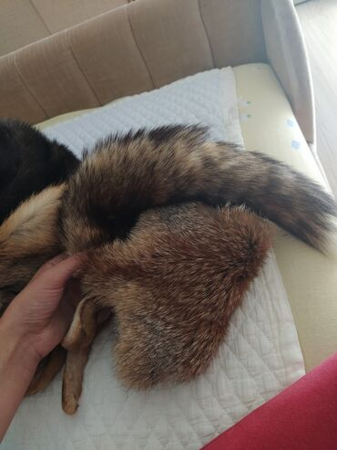 Krzneni kaputi - Nis: Subara lisica i sal lisica od pravog krzna