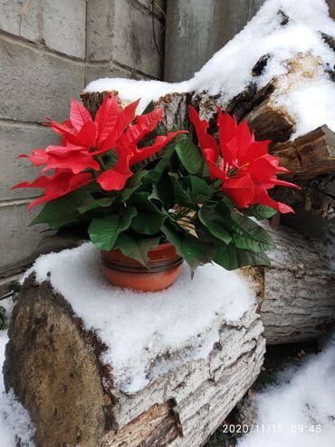 Декоративные цветы ручной работы Украсят ваш интерьер Красиво всегда!!