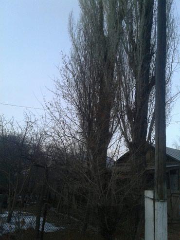 Бак кыйганы балдар керек 2-шт. тал Жети- Огуз Кызыл-Суу в Кызыл-Суу