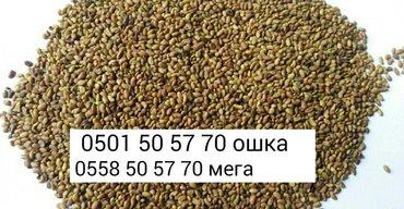 Беде урук. Люцерна г. Кара-Балта Семена люцерны Магнитка (Пропущены