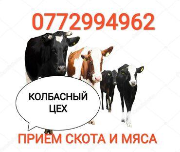 Прием любого скота на колбасныйДорого. Звоните,работаем в любое время