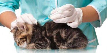 передержка кошек бишкек in Кыргызстан   ЗООТОВАРЫ: Прививка для собак и кошек
