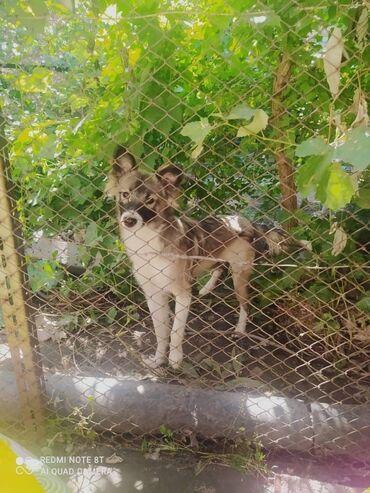 фемибион 2 цена бишкек в Кыргызстан: Фонд помощи Животным Добрые руки, ищет добрые руки для собачки. Дали к