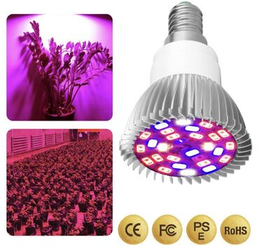 Фитолампы. Лампы для растений. Обычный цоколь стандарта Е-27. Цены роз
