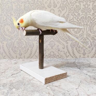 Мини присада для попугая, мини стенд для попугая. P.S. сам попугай не