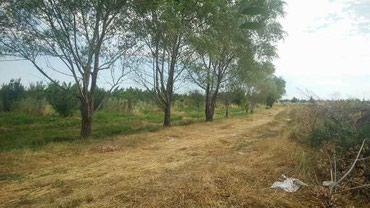 ара в Кыргызстан: Продам соток Для сельского хозяйства