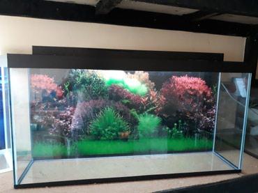 Bakı şəhərində 1metrelik akvarium